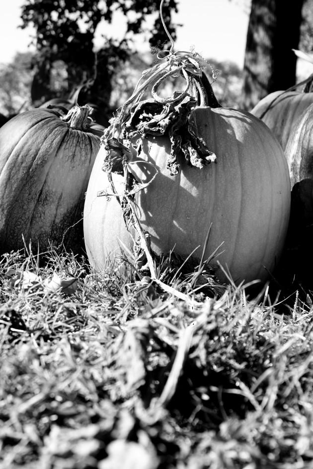 Pumpkin_bw