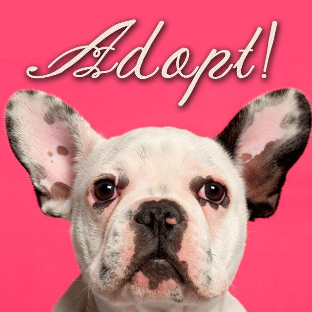 adopt_today